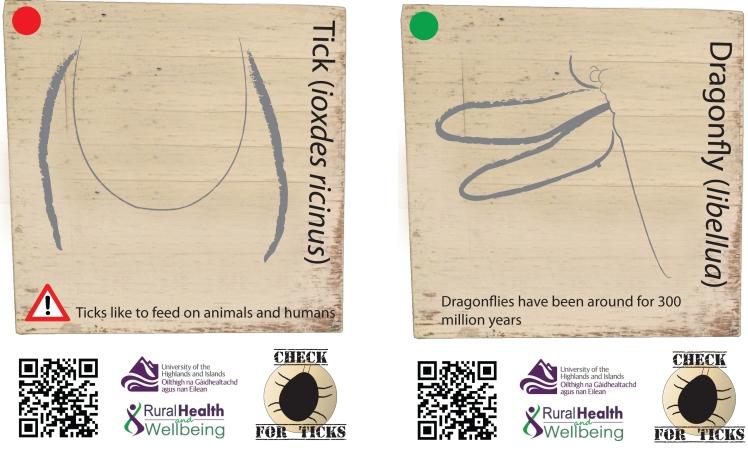 Bug body part plaques